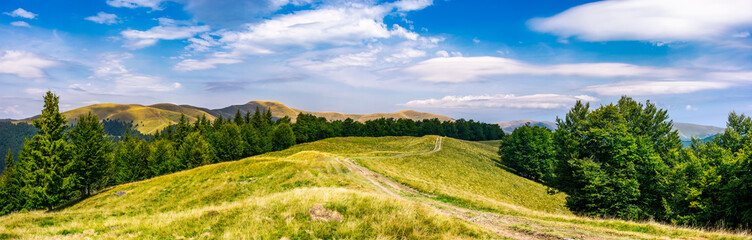 gorgeous panorama of Svedovets mountain ridge. country road runs in to the distance through grassy meadow among the ancient forest, great location for hiking. beautiful weather on summer day