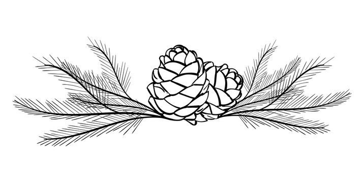 Pine Branches and Pine Cones