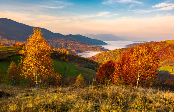 yellow trees on the edge of a hill in autumn. lovely mountain landscape with valley in fog under the gorgeous sky