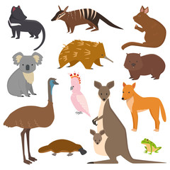 Australian wild vector animals cartoon collection australia popular animals like platypus, koala, kangaroo, ostrich set isolated on white background