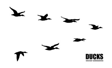Vector silhouettes of ducks.