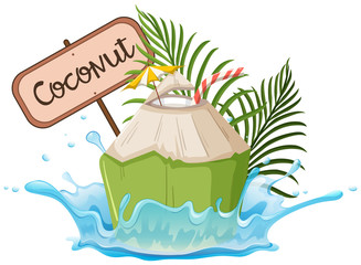 A Coconut Sign on White Background