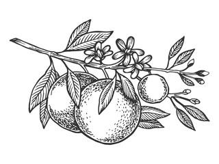 Orange tree branch engraving vector illustration