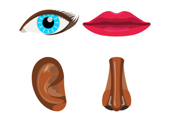 Set of Woman Body Part. Face Body Icon. Vector Illustration Label