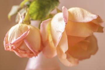 Primer plano de dos rosas en un florero.