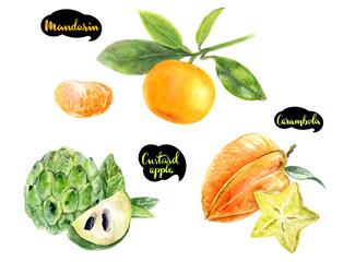carambola mandarin sugar custard apple watercolor