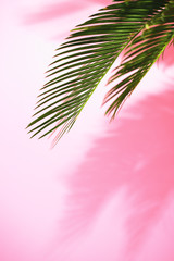 Summer tropical sunny background with palm leaves