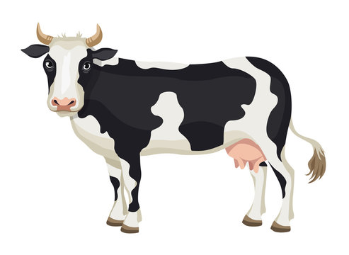 Vector cartoon black and white cow isolated on white background - dairy products, farming