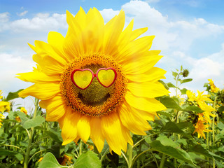 Sonnenblume mit Sonnenbrille - Smile