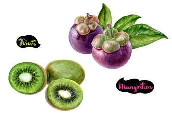 mangosteen kiwi watercolor