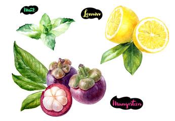 mangosteen lemon mint watercolor