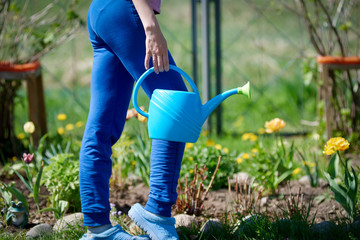 Woman watering flowers with water can on a croft. Close view.