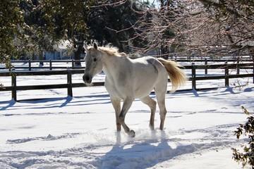 Grey Horse in Winter Snow