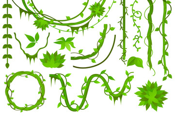 vine. liana. set. vector