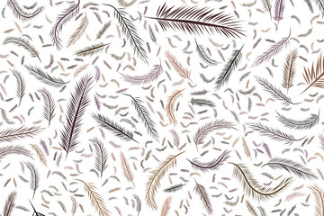 Abstract illustrations of feather, conceptual. Wallpaper, sketch, shape & canvas.