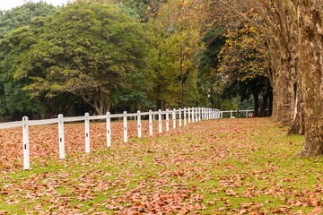 Autumn Fall Equestrian Fence Trees Leaves Landscape