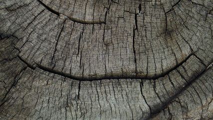 old tree wood background