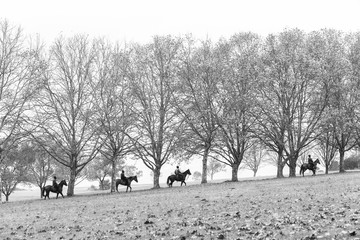 Horses Riders Autumn Fall Season Landscape with dry trees and leaves over equestrian fields.