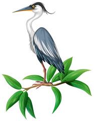 A Stork on White Background