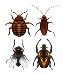 A Set of Disease Insect