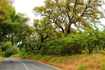 Road crossing Cork oak forest in Arrabida Mountains