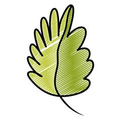 doodle nature tropical leaf botanic plant