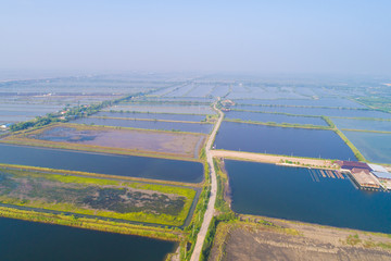 Aerial view of saline plantation field in morning