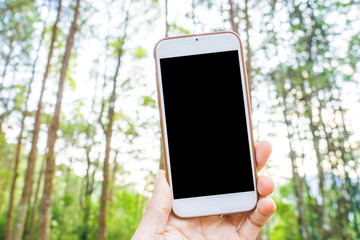 Hand hold smartphone to take photo of pine forest