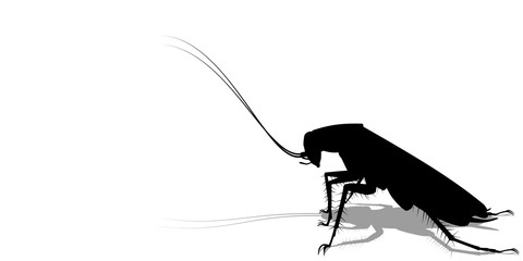silhouette of cockroach on transparent background