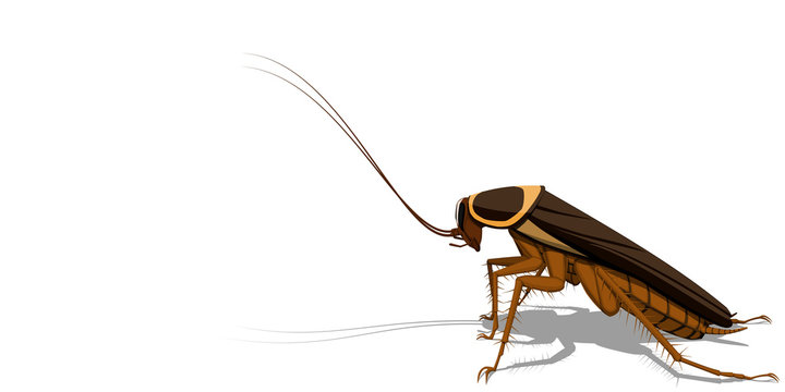 Isolated cockroach on transparent background