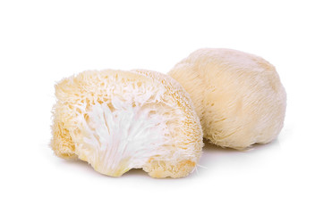 mushroom mokey head, lion mane or yamabushitake isolated on white background