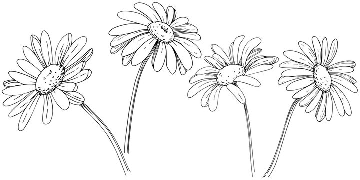 Daisy in a vector style isolated. Full name of the plant: daisy, chamomile. Vector olive tree for background, texture, wrapper pattern, frame or border.