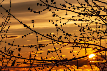Swollen buds of branches on the background of a picturesque, spring sky at sunset
