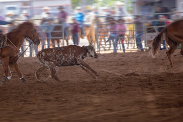 Team Calf Roping Event At A Rodeo