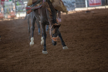 Bronco Horse Trying To Buck Off Rider At Rodeo