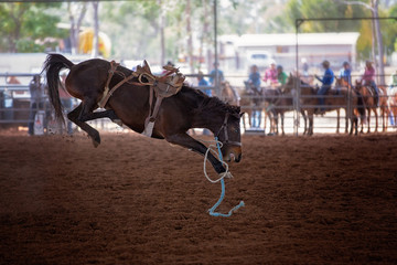 Bucking Horse At Rodeo After It Has Thrown Its Cowboy Rider