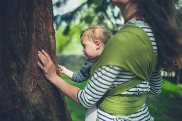 Mother and toddler touching giant redwood