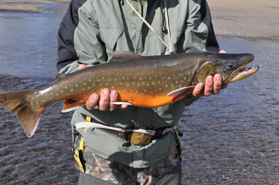 Successful fishing, Arctic char.