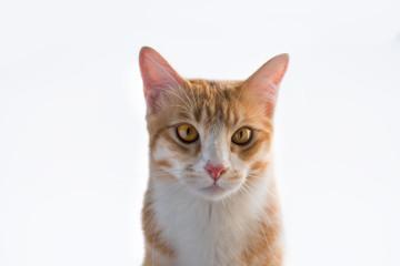 The orange cat looks this way.