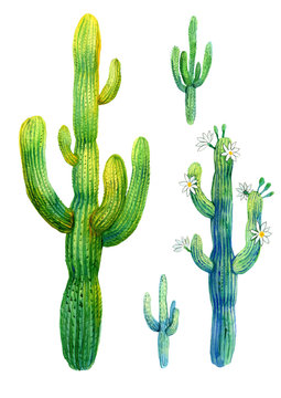 Cactus watercolor illustration of blooming saguaro on white background.
