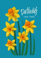 Daffodils. Spring flowers