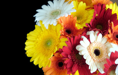 Poster Gerbera Beautiful round motley bouquet of multicolor gerberas on right side of the Photo isolated on black background top view closeup