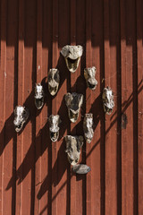 Fish heads/Fish bone heads pinned on a red wall in Fjäderholmarna island near Stockholm.