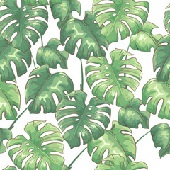 Tropical seamless pattern with monstera leaves on white background. Exotic vector background.