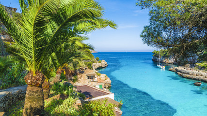 Wall Mural - Palm tree and turquoise water of Cala Llombards, Mallorca Island, Spain