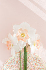 Delicate bouquet of three Orchid daffodils on pink background with crochet napkin, minimalistic creative pastel concept, square, hard light