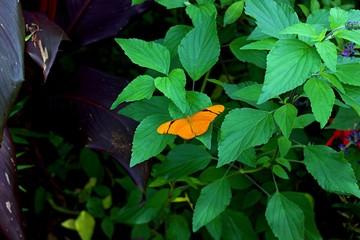 Orange Butterfly Landscspe