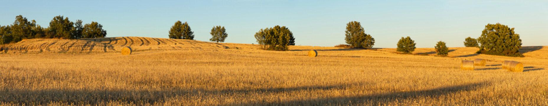 Vista panoramica  de una loma con campos agricolas de cereal ya recolectado en balas o pacas  y algun roble disperso