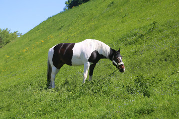 Photo of a close-up of a beautiful horse