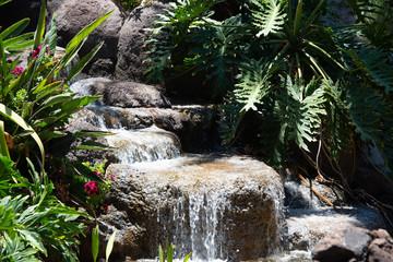 Tropischer Bachlauf im Garten